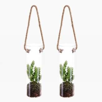 west elm Faux Succulent in Hanging Vase (Set of 2) - Green