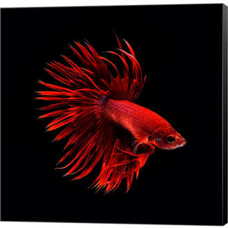 Betta Metaverse Red Fish by PhotoINC Studio Canvas Art