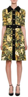 Dolce & Gabbana Short-Sleeve Pear-Print Brocade A-line Dress w/ Velvet