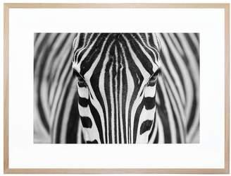 United Artworks Zebra Acrylic Print With Frame