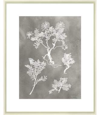 STUDY Herbarium II Framed Print
