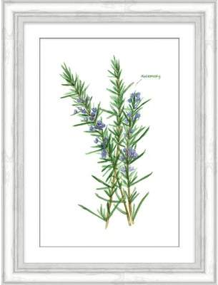 Wayfair 'Rosemary Herb' Framed Watercolor Painting Print