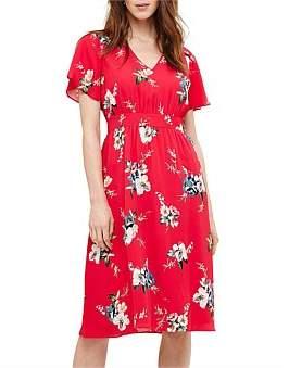 Phase Eight Alexandra Print Dress
