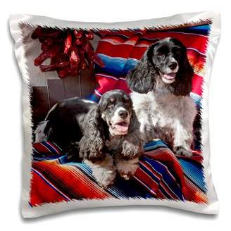 3dRose Two Cocker Spaniel dogs on a blanket - US32 ZMU0078 - Zandria Muench Beraldo - Pillow Case, 16 by 16-inch