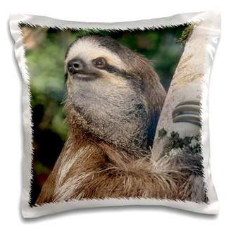 3dRose Three-toed Sloth wildlife, Costa Rica - SA22 KSC0126 - Kevin Schafer - Pillow Case, 16 by 16-inch