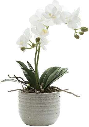 At Zanui Florabelle Artificial Orchid With Ridged Pot