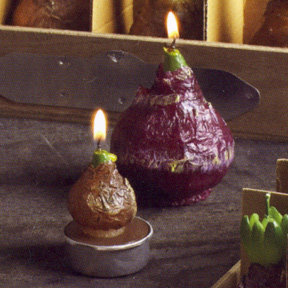 Roost Clearance - Hyacinth Candles