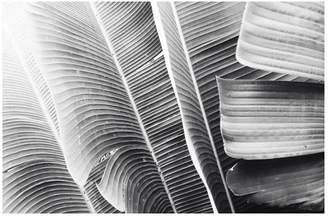 Pottery Barn Lush Leaves Framed Print by Lupen Grainne