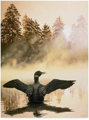 Parker Trademark Fine Art Misty Dawn Loon by Ron Parker, 14x19-Inch
