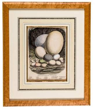 Egg Botanical Print
