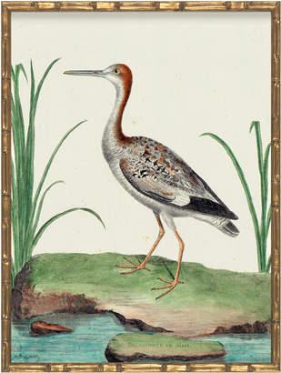Serena & Lily Vintage Bird I in Bamboo Frame by Whalebone Creek Prints
