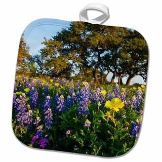 3dRose flowers and live oak in Texas hill country. - Pot Holder, 8 by 8-inch