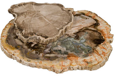 Petrified Wood Cheese Trays