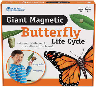 Educational Insights Giant Magnetic Butterfly Life Cycle