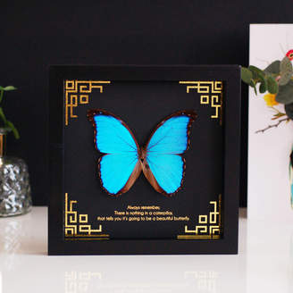The Luxe Co Personalised Blue Morpho Butterfly Wall Art Frame