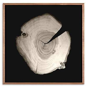 Dacor Natural Curiosities Framed Tree Rings Photograph