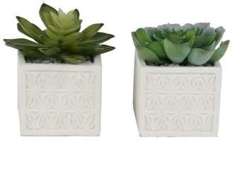 Three Posts 2 Piece Succulent Desktop Plant in Pot Set