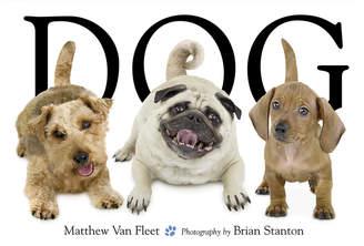 Simon & Schuster Dog
