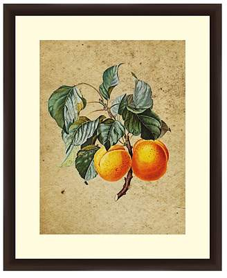 PTM Images Vintage Apricot Wall Art