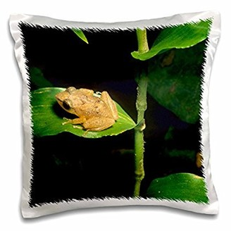 Coqui 3dRose frog on leaf, El Yunque Forest, Puerto Rico.-CA27 KSC0000 - Kevin Schafer, Pillow Case, 16 by 16-inch