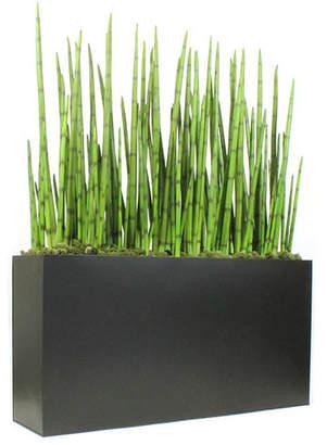 Dalmarko Designs Snake Plant Grass in Planter