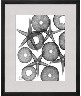 Art.com 'Beach Stars and Sea Urchins Close Up' by Albert Koetsier Framed Graphic Art