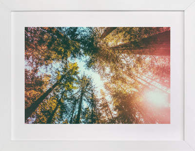 Redwoods Surround Me Art Print