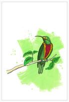 Jonathan Bass Studio Bird Study 1, Decorative Framed Hand Embellished C