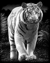 Reeves Tiger Scraperfoil Artwork, Silver