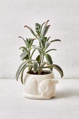 "Urban Outfitters Sleepy Kitten Ceramic 4"" Planter"
