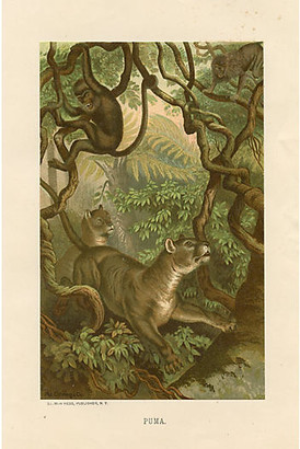 One Kings Lane Vintage 19th-C. Puma Print - Prints with a Past - multi