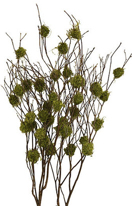 Knud Nielsen Company Set of 4 Mountain-Laurel Branches - Dried