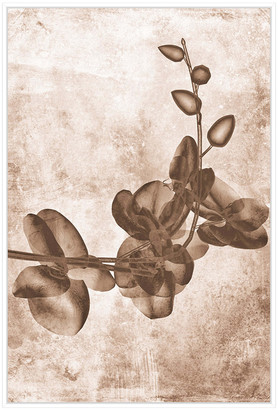 Jonathan Bass Studio Sepia Flower Inversions 7, Decorative Framed Hand