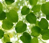 Ella Doran Wallpapers Sunlight Through Leaves