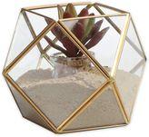 Danya B. Brass and Glass Terrarium