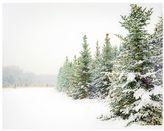Pottery Barn Snow Scene Framed Print by Cindy Taylor