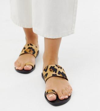 Asos Design DESIGN Wide Fit Faro leather toe loop flat sandals in leopard print-Multi