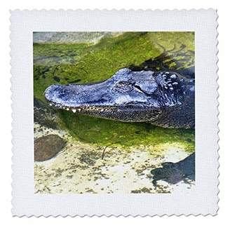 """Pool' 3D Rose"""" American Alligator Resting in in A Small Pool Square 12 by 12 Inch Quilt 12 x 12"""