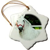 3dRose LLC orn_671_1 Horse - Andalusian Gelding - Ornaments