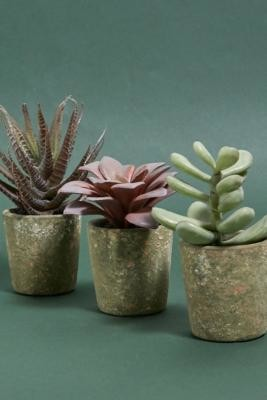 Urban Outfitters Faux Potted Succulent Assorted - Assorted ALL at