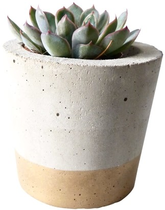 Olive Jennings Charlie Gold Concrete Planter