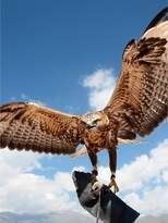 Virgin Experience Days Falconry Taster For Two In A Choice Of 6 Locations