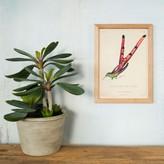 Graham and Green Framed Rectangular Hummingbird Tail Print