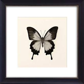 Butterflies I Framed Art Picture/Print In A Black Frame - Glass Front - Outside Measurements 41 x 41cm