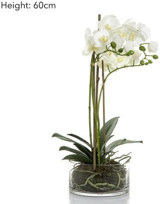 Emac & Lawton Orchid In Round Glass Vase White