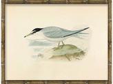 Soicher Marin Sea Bird 2