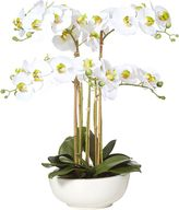 Rogue Artificial Phalaenopsis with Ceramic Bowl