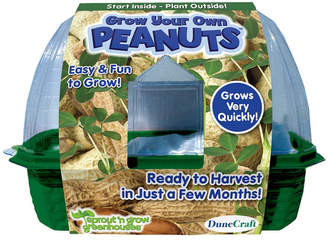 Your Own Grow Peanuts Plant Kit