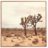 DENY Designs California Joshua Trees by Catherine Mcdonald (Framed)