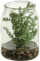 Succulents in Jar